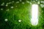 Brand new Ecological Bulbs